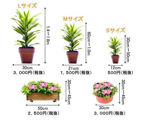 観葉植物レンタルの植物サイズ例